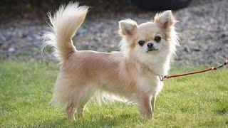 الكلب الذي هاجمته كلاب ضاله استغرق علاجه ٤٥ يوم مع جمال العمواسي