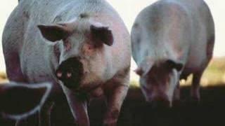 DJ Koze - Deine Reime Sind Schweine thumbnail