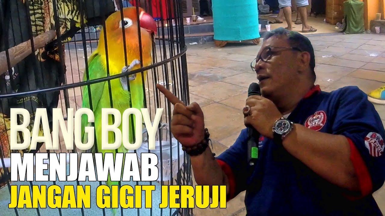 BANG BOY MENJAWAB Aksi Lovebird Gacor Gigit Jeruji Tidak