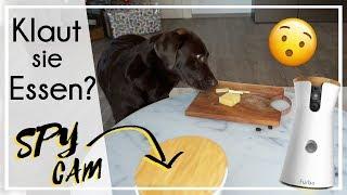 Klaut Milka heimlich Essen? | SPY CAM | Furbo Dog Kamera | KaroLovesMilka
