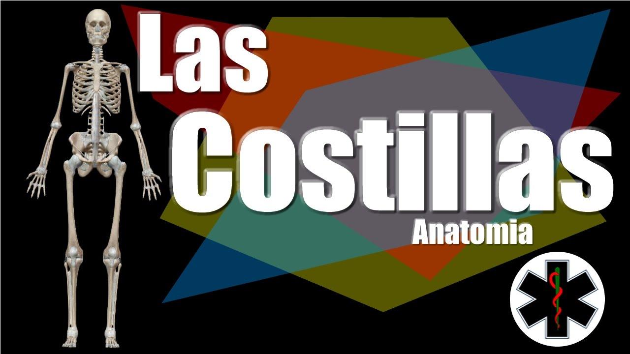 Costillas Anatomia | Cuantas Costillas tenemos - YouTube