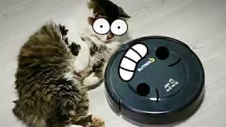 Робот пылесос мешает Коту Масе спать