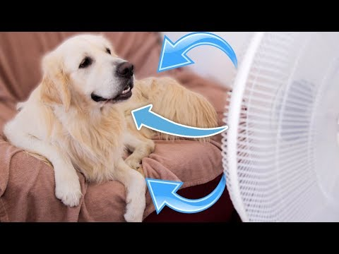 What Does My Dog Do When It's Hot