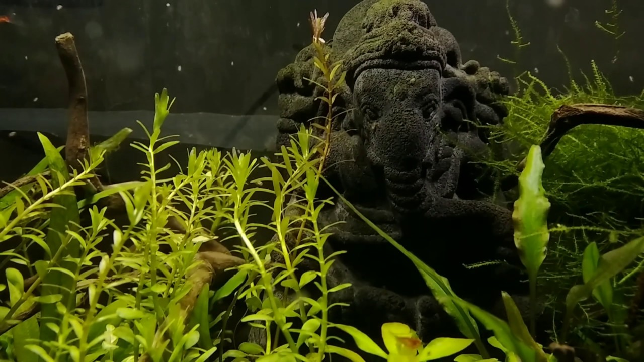 Lost World Aquascape - YouTube