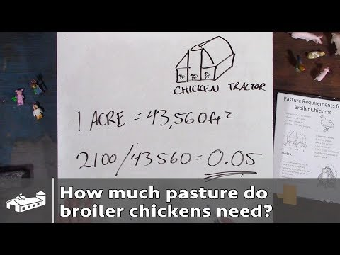 How Much Pasture Do Broiler Chickens Need? - PPP#1 S1:E2