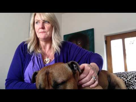 Best how to Heal your Pet Dog Puppy Animal with Universal Reiki Energy Healing