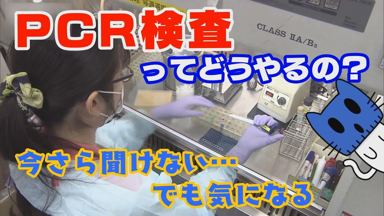 検査 原理 pcr