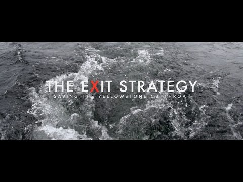 The Exit Strategy • Saving the Yellowstone Cutthroat