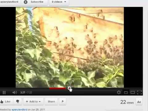 Hughenden Manor Bee project - what its about how to see us in action.
