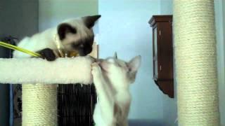 Madori and Malani thumbnail