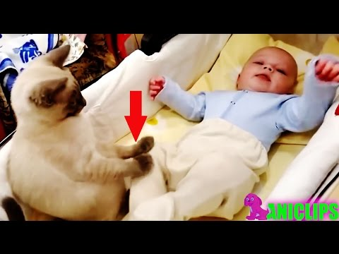 Thumbnail: Amazing Cat Protecting Babies ✯ Cats Always Love Babies