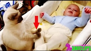 Amazing Cat Protecting Babies ✯  Cats Always Love Babies
