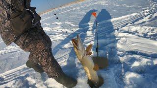 Рыбалка на озере Кокай декабрь 2020 Коргалжинский заповедник
