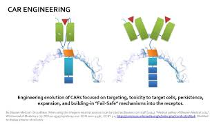 Chimeric Antigen Receptor (CAR) / CAR-T