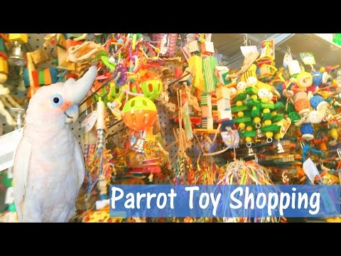 PARROT TOY SHOPPING! Parrot store tour vlog
