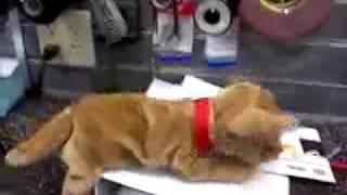 vuclip Dog Humps Folder at work
