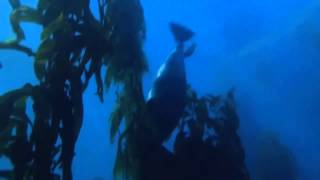Caesius - Through The Blue
