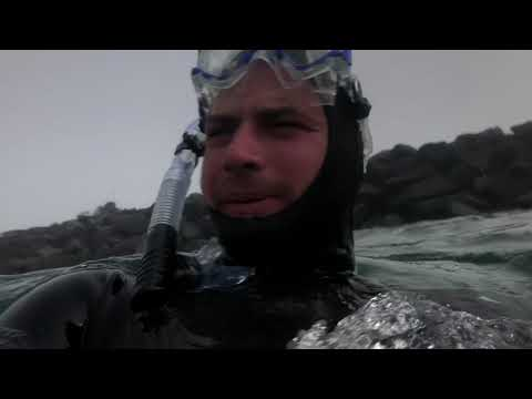Freediving Oregon Coast ( Giant Jelly Fish, Crabs And All Black Star Fish)
