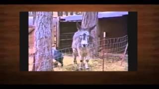 Самые смешные ролики про животных 8