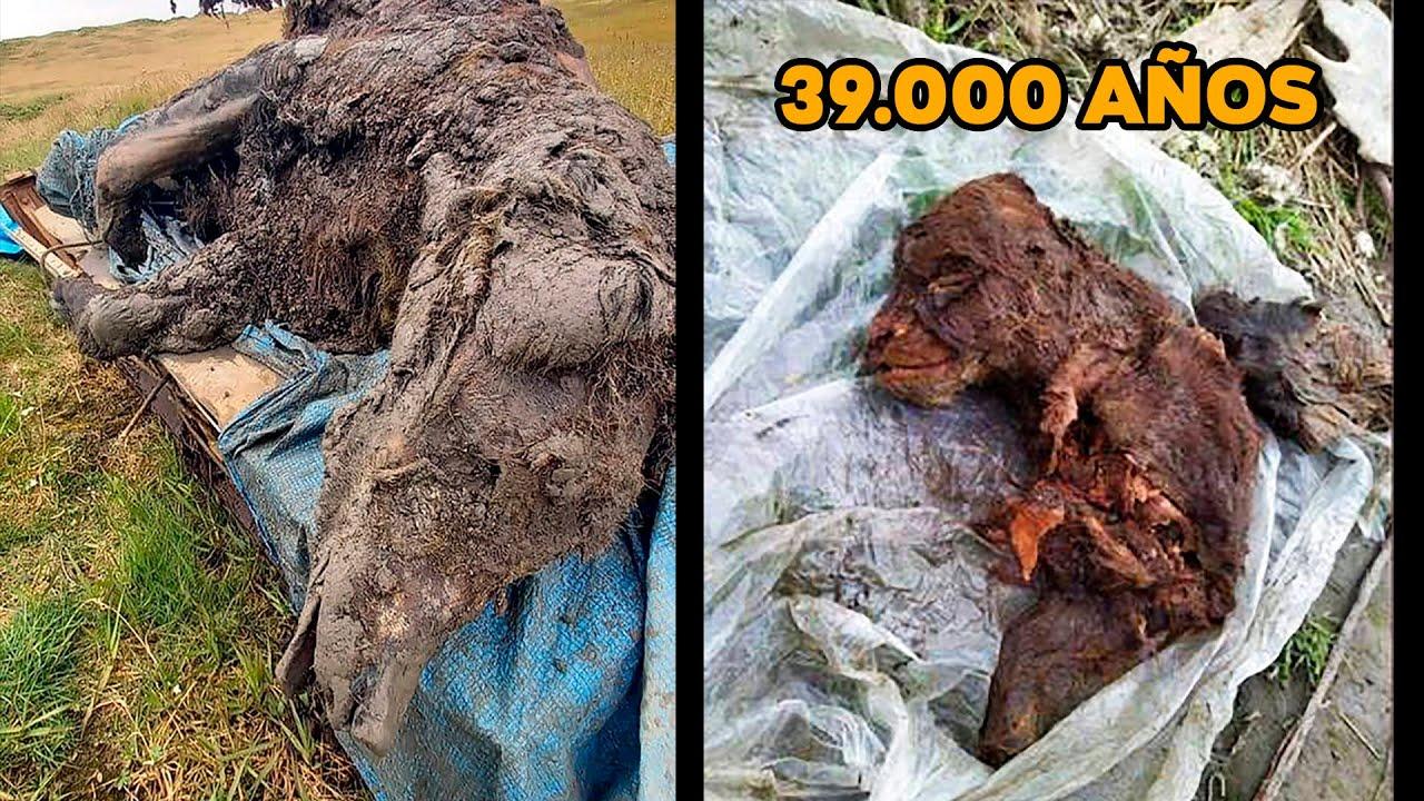 Oso de las cavernas y cachorro de 39.000 años perfectamente conservados