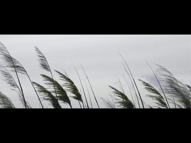 Fúj a szél /Nád /Borús