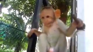 Маленькие смешные обезьянки, видео приколы с собаками 2013