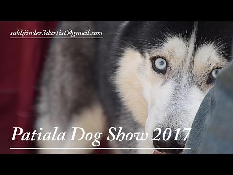 Patiala Dog Show 2017