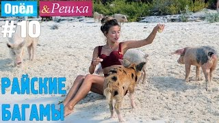 #10 Райские Багамы. Орёл и Решка. Рай и Ад. UKR