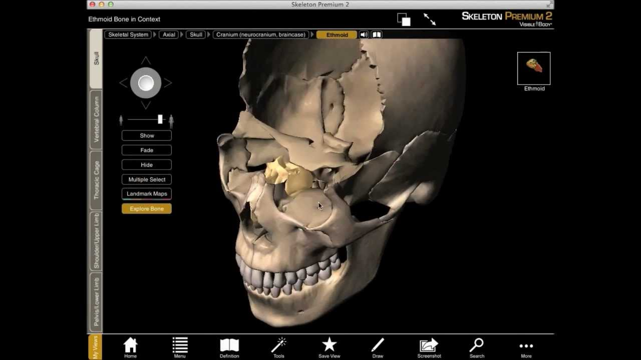 exploring the ethmoid bone in 3d with skeleton premium - youtube, Cephalic Vein