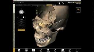 Exploring the Ethmoid Bone in 3D with Skeleton Premium
