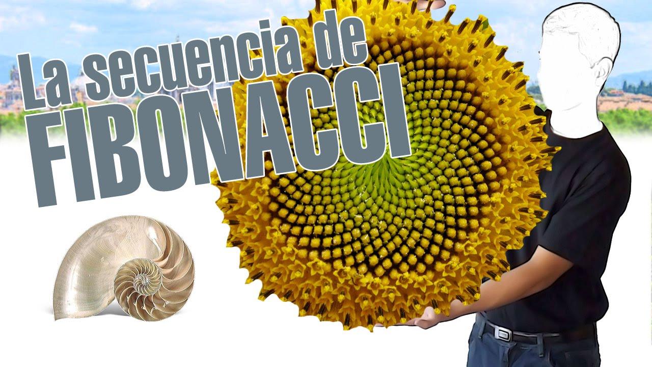 La secuencia de Fibonacci, en 3 minutos. www. explainers.tv