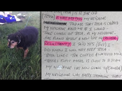 """Lonely 12-Year-Old Dog Found Abandoned in Field with Note: """"I Don't Need a Dog"""""""