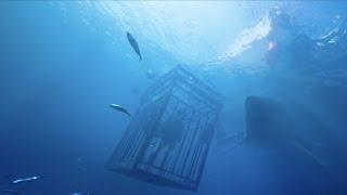 Синяя бездна / 47 Meters Down (2017) Дублированный трейлер HD