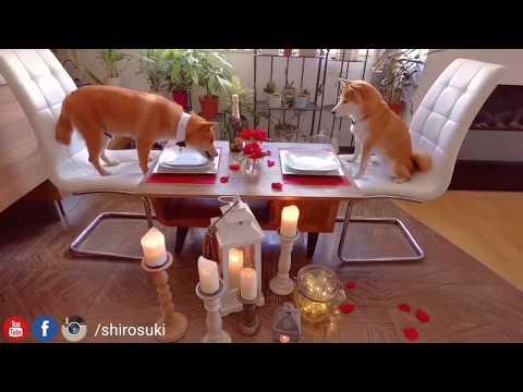 Romanticc dinner for him & for her