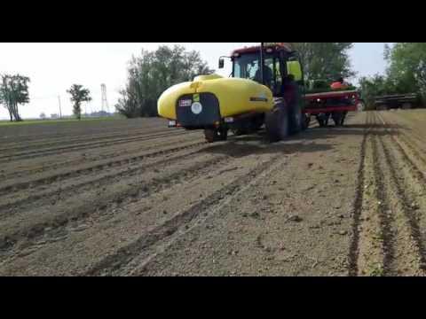 Trapianto pomodoro da industria 17 youtube for Trapianto pomodori