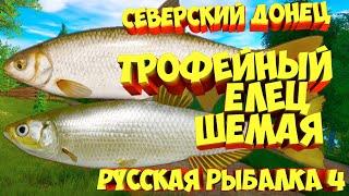 русская рыбалка 4 Елец Шемая река Северский Донец рр4 фарм Алексей Майоров russian fishing 4