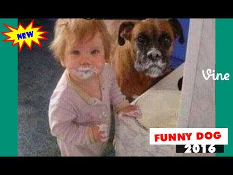 Baby and dog ❤️  Funny babies annoying dogs❤️❤️ Compilation 2016