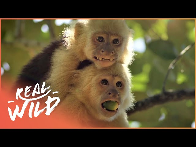Welcome To The World Of Extraordinary Animals!   Real Wild Documentary