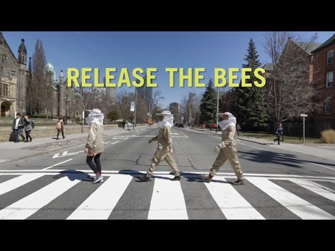 University of Toronto: Release the Bees