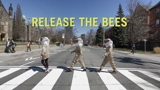 University of Toronto: Release the Bees thumbnail