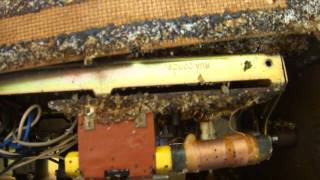 Bed Bugs in a Radio