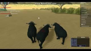 Roblox| Wild Savannah|2nd part of 2nd Buffalo migration|