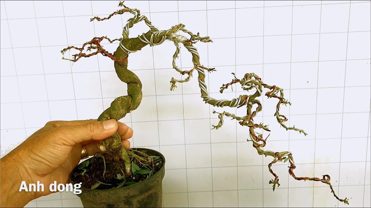 Uốn cây bonsai dáng lạ