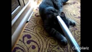 śmieszne koty plus odkurzacz słodkie kociaki bawią się odkurzaczem kompilacja 2014 dobre jaja
