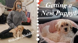 Getting a New Puppy! *First Day of 2021 Vlog*