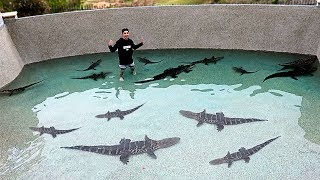 I Filled my Pool with DEADLY ALLIGATORS!!