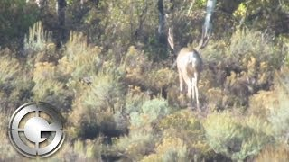 Giant Mule Deer hunt with Western Lands Outfitters