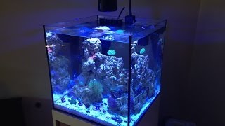 Beautiful Reef Tank - 34 Gal Solana