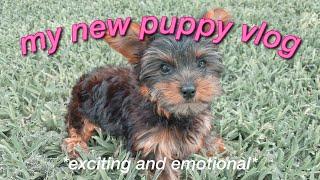 GETTING MY NEW YORKIE PUPPY! *puppy vlog*