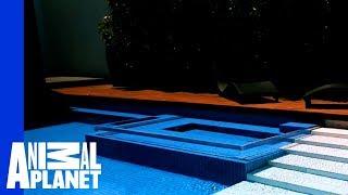 Go Down Under in This Australian Pool Masterpiece